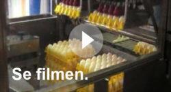 Pelle&Lisa / Norrlandsägg - Film