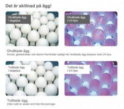 Pelle&Lisa / Norrlandsägg - Kvalitet-skillnad
